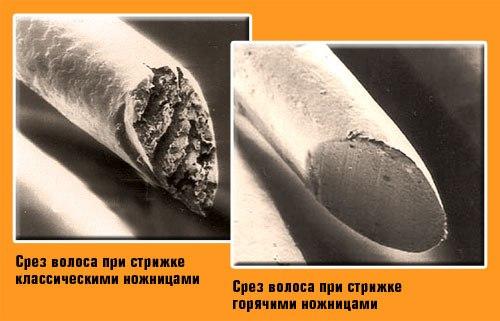 Горячие ножницы термострижка в Витебске